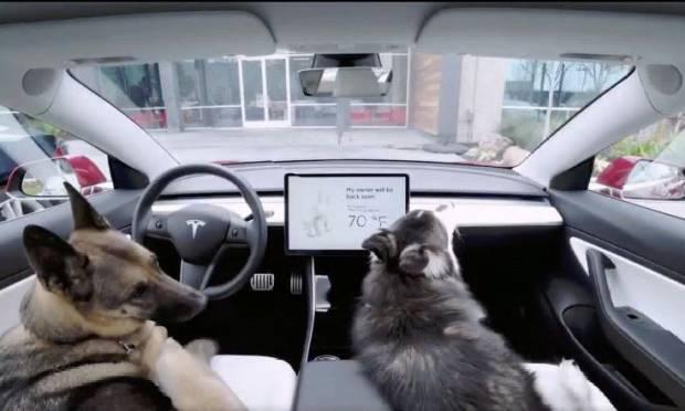 Tesla Con il Dog Mode tiene i cani al fresco